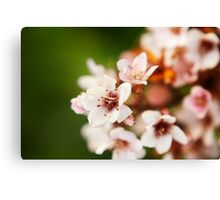 Macro flowers, floral, nature photography Canvas Print
