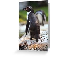 Penguin Pose Greeting Card