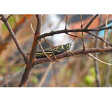 insect on branch Photographic Print