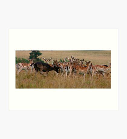 Deer - Surry Art Print