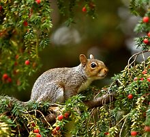 Baby Grey Squirrel by Glasseye