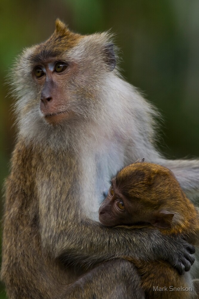 Long-tailed Macaque (mother & child) by Mark Snelson