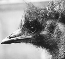 portrait of an emu by Cheryl Dunning