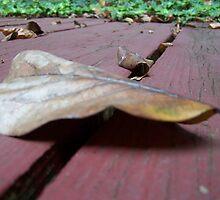 Fall by carlyalana06