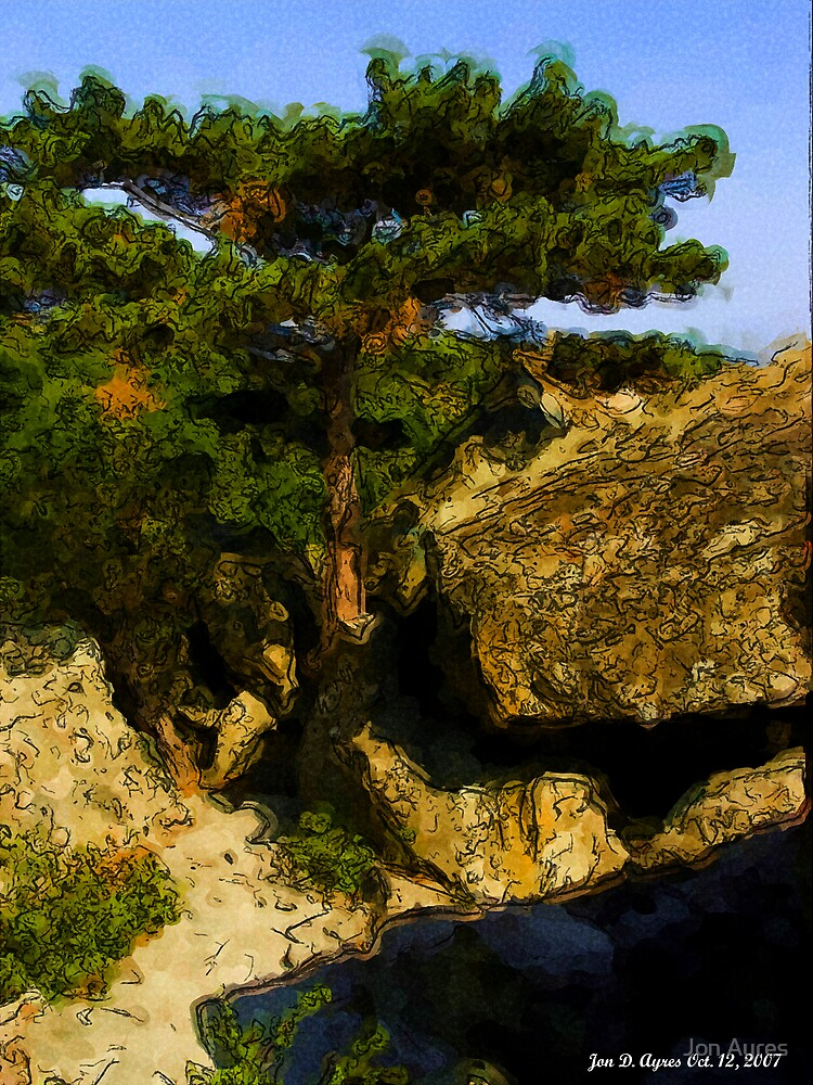 Lonely Pine by Jon Ayres