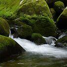 Mountain Stream by Sherri Hamilton