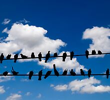 Birds on a wire by Kurt  Tutschek