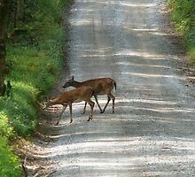 Deer Crossing by Sherri Hamilton
