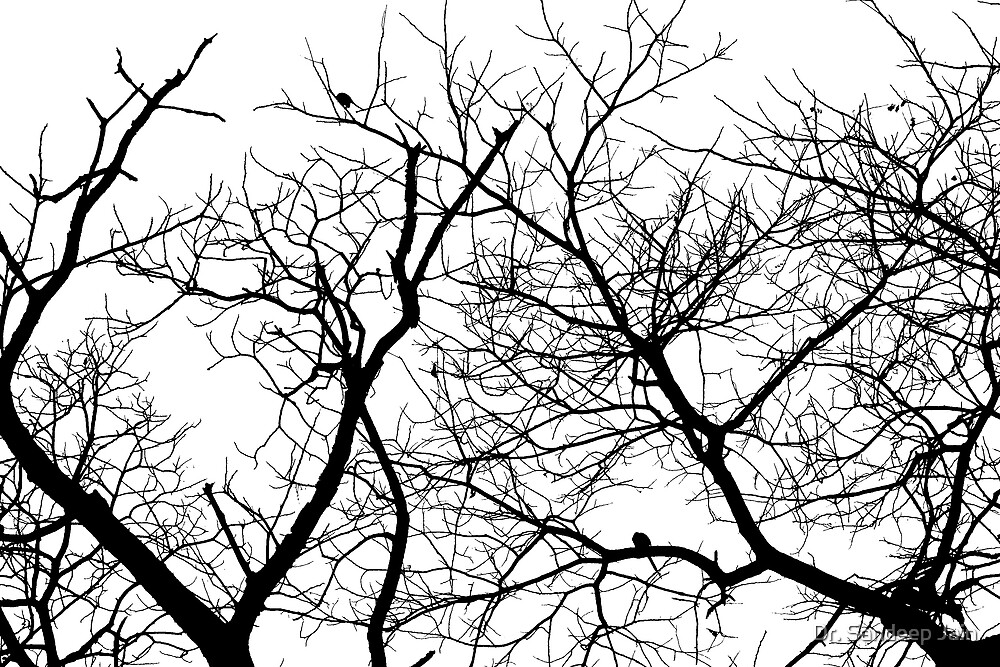 Silhouette of a naked tree by Dr. Sandeep Jain