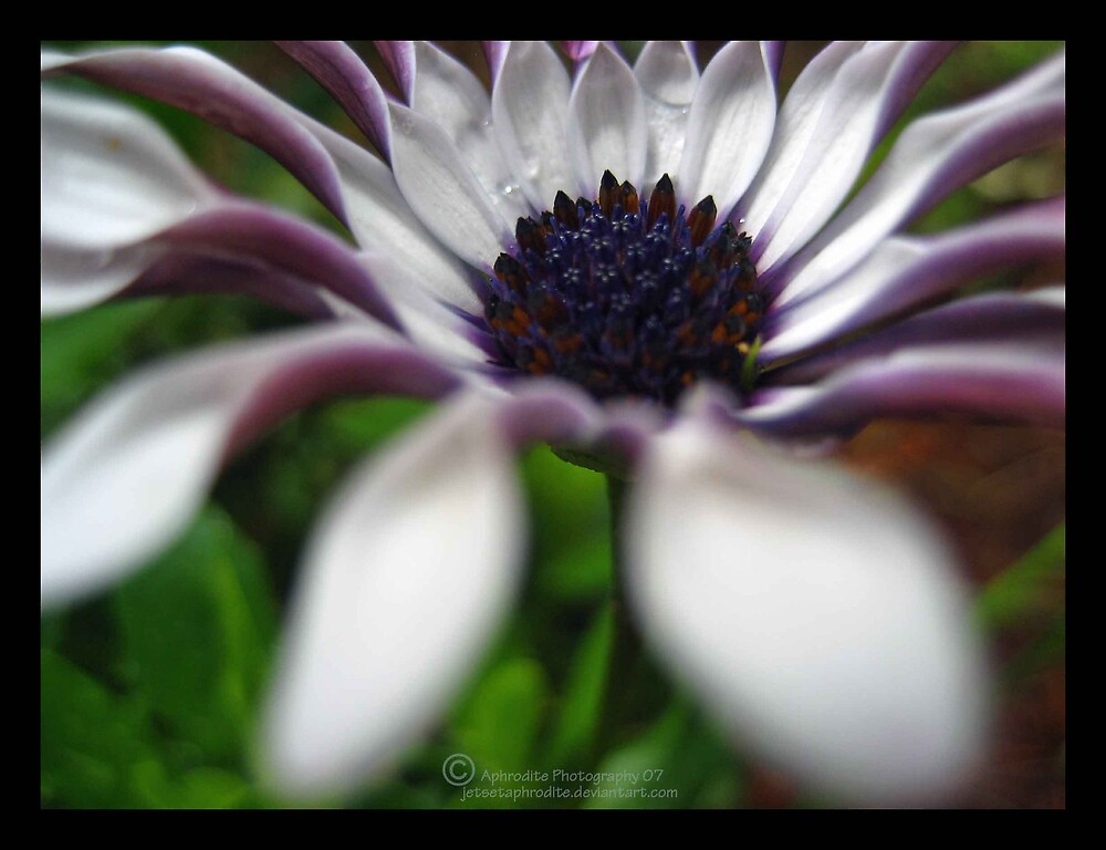Joy in soft silence by JetsetAphrodite