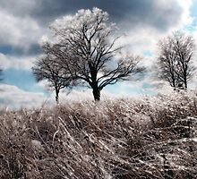 Prairie ice by signore