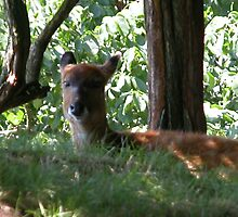 glad to be in the shade by phardy