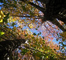 Autumn Perspective by Jennie Smolow