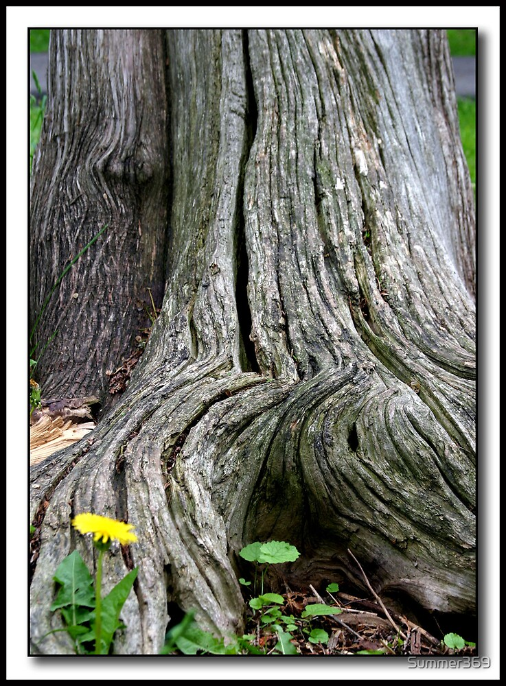Tree Trunk by Summer369