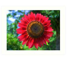 Reddest Sunflower Art Print