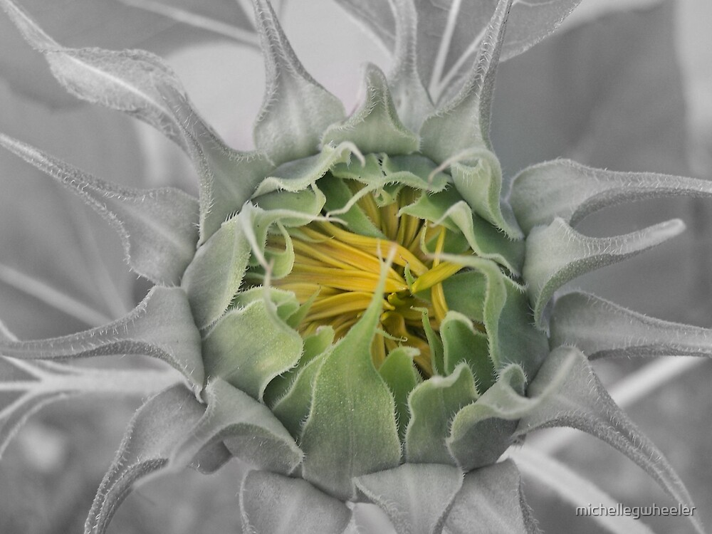 Flower Yet To Come by michellegwheeler