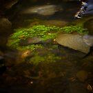 River Moss by Michael Eyssens