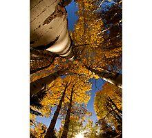 Autumn Aspens Photographic Print