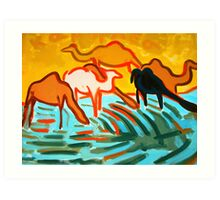 Camels drinking water  Art Print