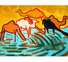 Camels drinking water  Photographic Print