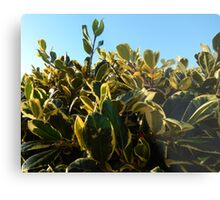 HOLLY WITH RED BERRY Metal Print