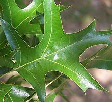 Oak Leaf by michellegwheeler