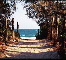 beach walk by david mcdonald