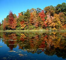 Fall Colors in Holly, MI by BobbieD