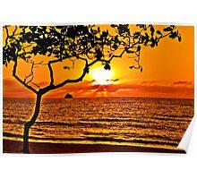 Palm Cove Sunrise Poster