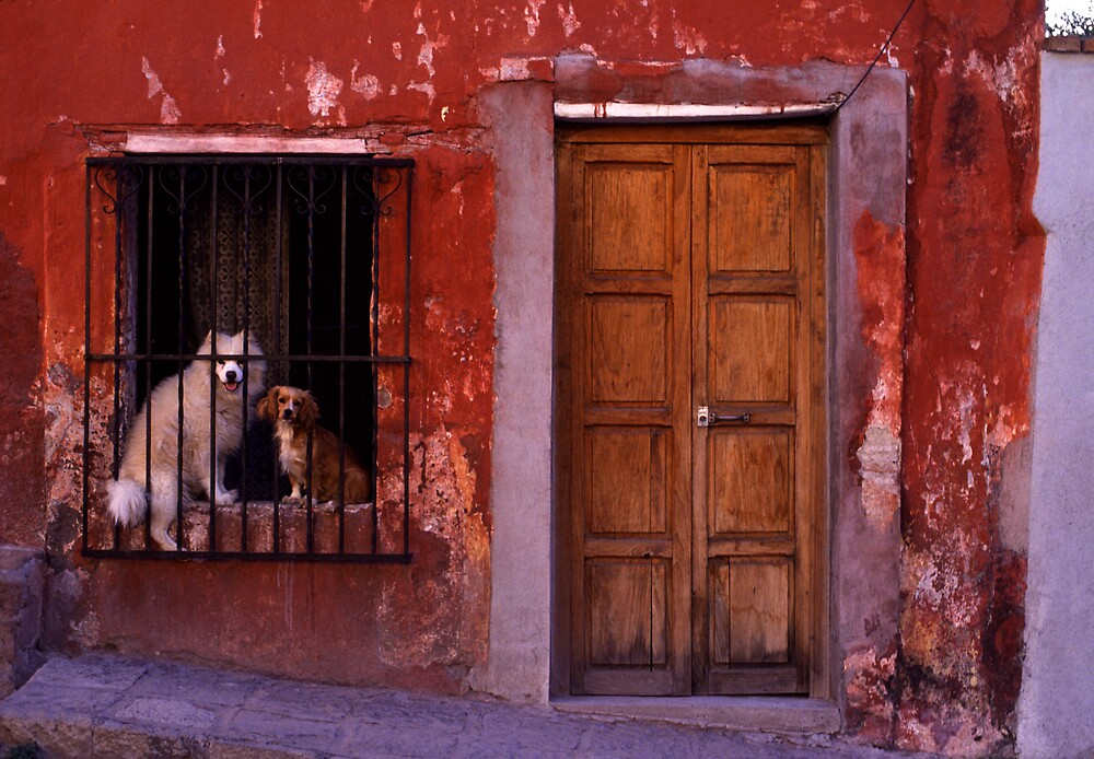 Two dogs in a window by laurencedodd