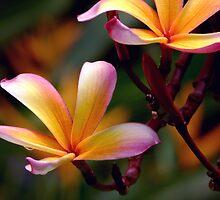 Frangipani by Dave Lloyd