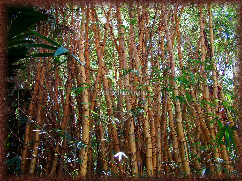 Bamboo by artistfemale