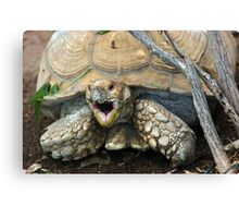 Smiling Turtle Canvas Print