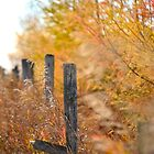 Fence by Roxanne Persson