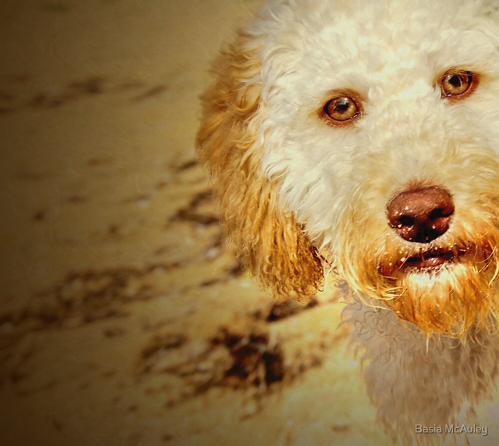 Best Friend by Basia McAuley