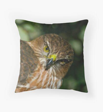 Sharp Shinned Hawk (juvenile) Throw Pillow
