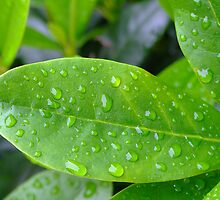 Green leaf with waterdrops by Sjouke Veenbaas