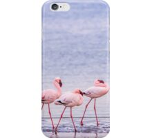 Flamingos (lesser) iPhone Case/Skin