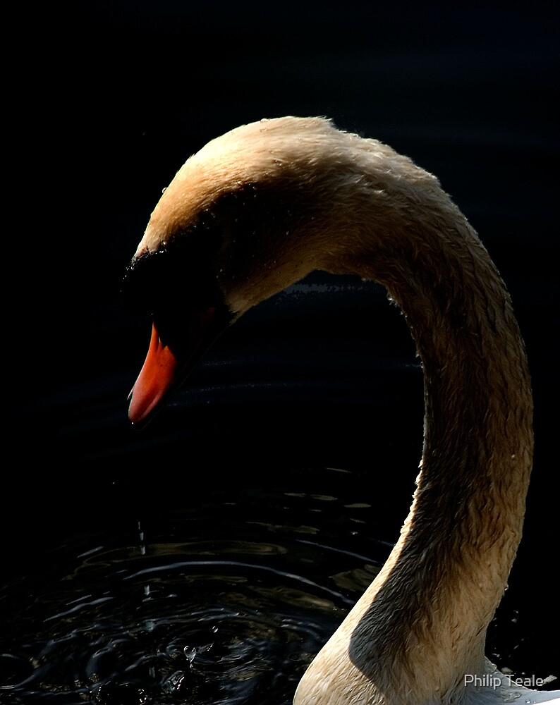Swan 3 by Philip Teale