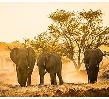 Elephants of Etosha National Park Photographic Print