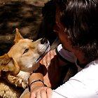 dingo's respect by Klaudy Krbata