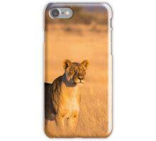 Lioness Gaze Etosha National Park iPhone Case/Skin