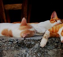Cat Nap by Emma  Brown