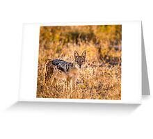 Jackal Etosha National Park Greeting Card
