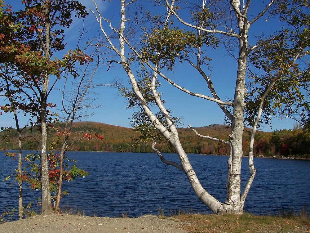 Lake Side Birch by Gene Cyr