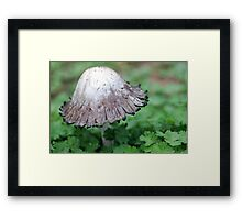 Green Lace Framed Print