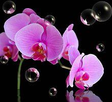 Beauty In Bubbles by Maria Dryfhout