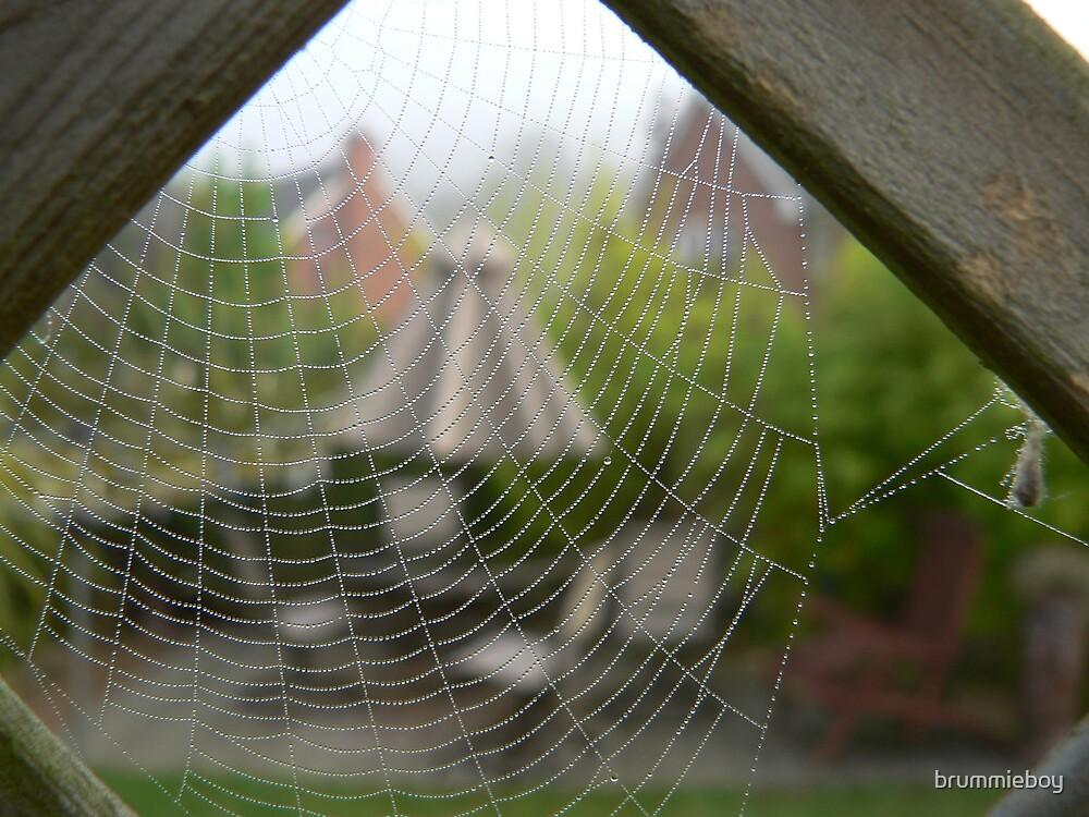 Spiders eye view by brummieboy