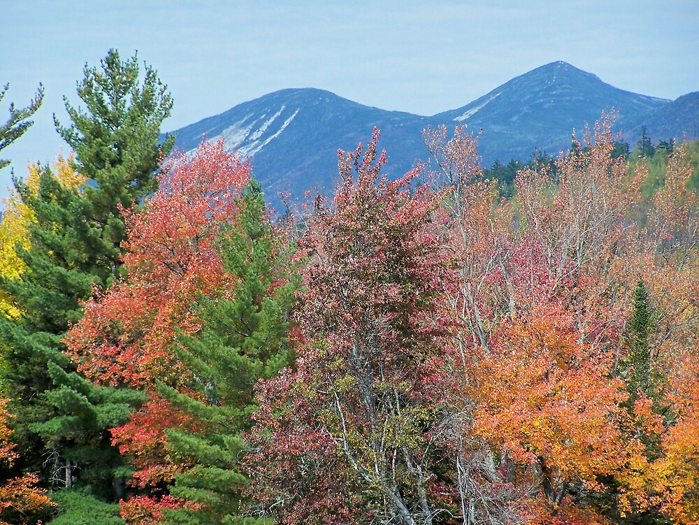 Autumn Trees by Gene Cyr
