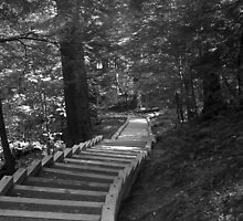 Stairs for Mother Earth by kaseylc